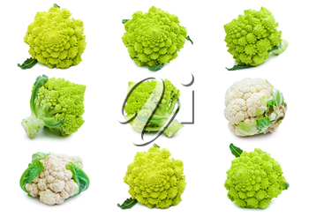 Collection of Romanesco broccoli and  cauliflower isolated on white background