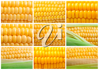 Collection of yellow corn