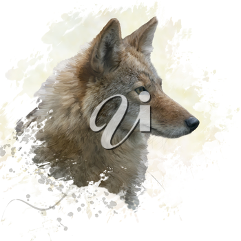 digital painting of coyote portrait