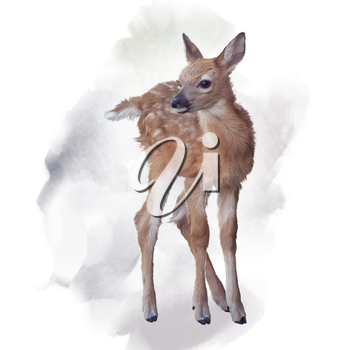 whitetail deer fawn watercolor painting
