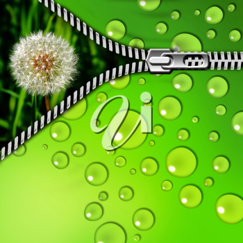 dandelion in the grass and zipper