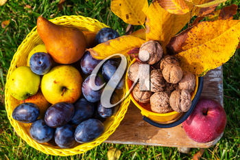Fall season scene with crop of fruits and walnuts in the garden. Beauty of the Autumn.