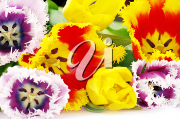 Royalty Free Photo of a Bouquet of Tulips