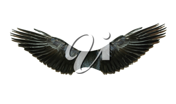 Royalty Free Photo of a Pair of Wings