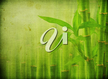 Royalty Free Photo of a Bamboo Plant Background