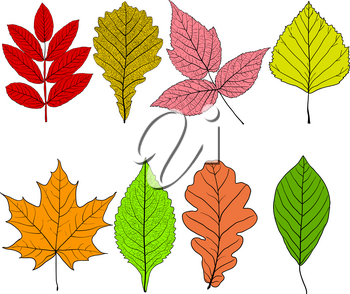 Set sketches silhouettes leaves on white background illustration.
