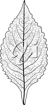 Sketches silhouettes leaves on white background illustration.