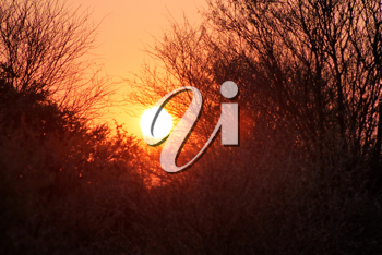 Royalty Free Photo of a Sunset Through Trees