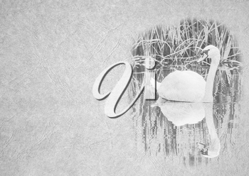 Greyscale Black and White Foldable Card Image of Swan on Pond with Reflection on  Leather Type Textured Paper with Heading and Large Text Area