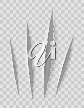 scratch claw cuts paper with transparent shadows for design vector illustration isolated on background