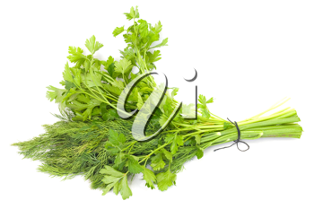 dill and parsley isolated on a white background