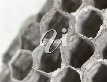 honeycomb as background