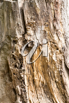 background from the bark of an old tree