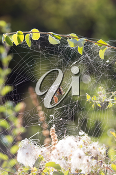 spider on a web in nature
