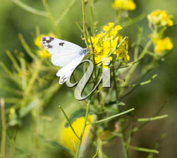 butterfly on yellow flower in nature