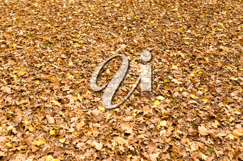 Leaves on the ground in the autumn nature