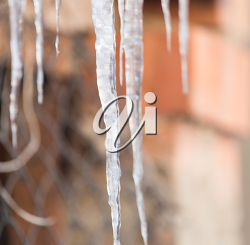 icicles on nature