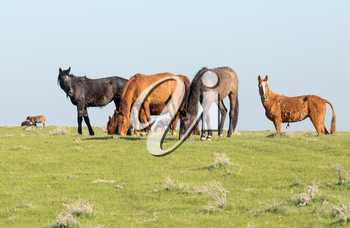 Horses in pasture on nature in spring