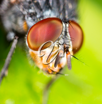 Portrait of a fly in nature. Super macro