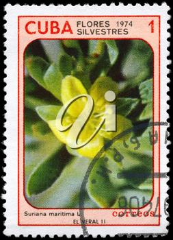 CUBA - CIRCA 1974: A Stamp printed in CUBA shows image of a Suriana maritima, from the series Wildflowers, circa 1974