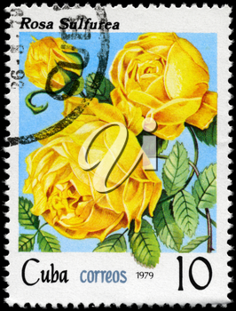 CUBA - CIRCA 1979: A Stamp shows image of a yellow Rose with the inscription rosa sulfurea, series, circa 1979