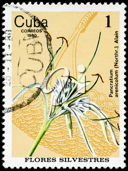 CUBA - CIRCA 1980: A Stamp shows image of a Spider Lily with the inscription Pancratium arenicolum (Northr.) Alain, from the series wild flowers, circa 1980