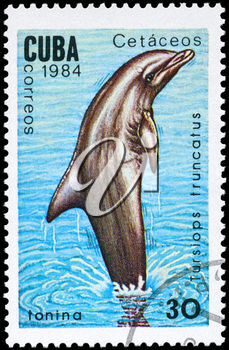 CUBA - CIRCA 1984: A Stamp printed in CUBA shows image of a Common Bottlenose Dolphin with the description Tursiops truncatus from the series Marine Mammals, circa 1984