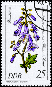 GDR - CIRCA 1981: A Stamp shows image of a Paulownia with the designation Paulownia tomentosa (Thunb.) Stand. from the series Arboretum Berlin, circa 1981