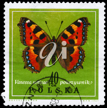 POLAND - CIRCA 1967: A Stamp printed in POLAND shows image of a Vanessa with the description Vanessa urtieae from the series Various Butterflies, circa 1967