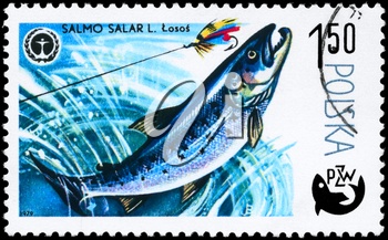 POLAND - CIRCA 1979: A Stamp printed in POLAND shows image of a Atlantic Salmon with the description Salmo salar from the series Fish and Environmental Protection Emblem, circa 1979
