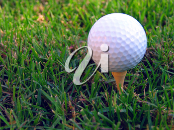 Royalty Free Photo of a Golf Ball on a Tee