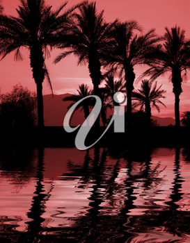 Royalty Free Photo of Palm Trees at Sunset