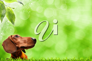 Funny Dog. Abstract spring backgrounds