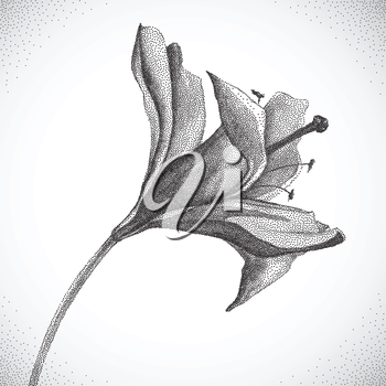 Flower. Black and white Dotwork. Vintage engraved illustration style