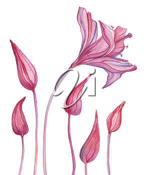 Abstract Flowers. Hand painted Watercolor botanical illustration