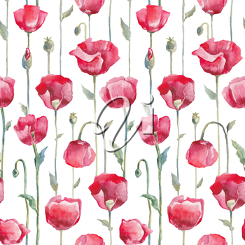 Red poppies on white background. Seamless watercolor floral pattern. Hand Drawn Flowers