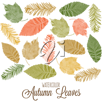 Set of watercolor colorful autumn leaves. Vector illustration.