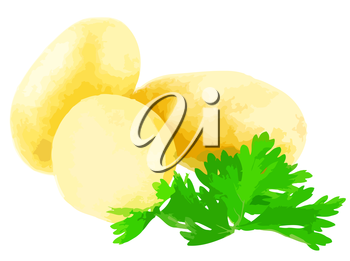 Young potatoes, decorating of parsley . Vector