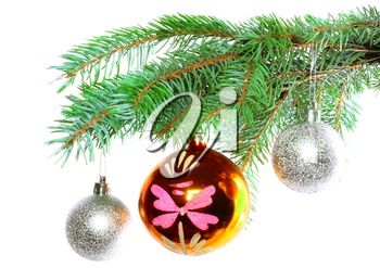 Christmas decoration-glass  ball on fir branches.Isolated