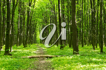 Royalty Free Photo of a Spring Forest