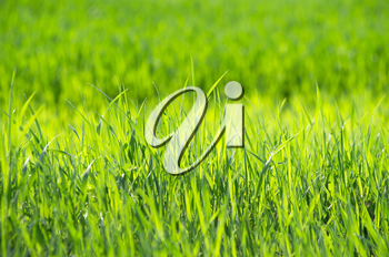 Royalty Free Photo of a Grass Background