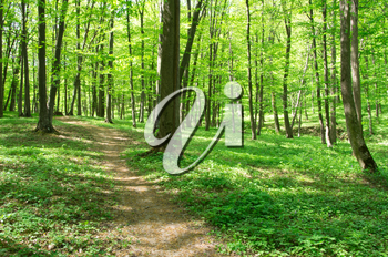 Royalty Free Photo of a Path in the Forest