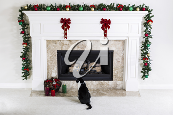 Family cat looking at Christmas Candles near natural gas fireplace with holiday Ornaments