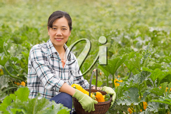 Mature woman harvesting ripe vegetables with basket containing zucchini and cucumbers. Lush green field in background.