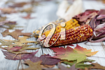 Close up of Autumn seasonal foliage and corn for seasonal holidays on white rustic wooden boards