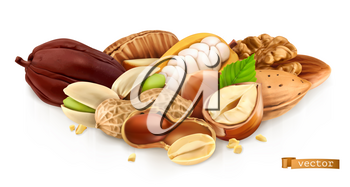 Nuts. Peanut, hazelnut, pistachios, almond, cocoa bean. 3d realistic vector illustration