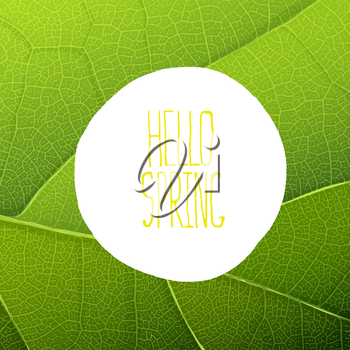 Hello Spring Text on Green Leaf Texture