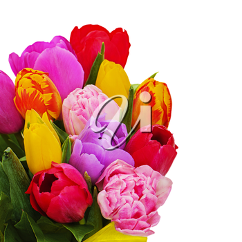 Fragment of floral bouquet from colorful tulips isolated on white background. Closeup.