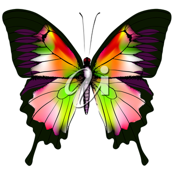 Isolated Butterfly Vector Illustration