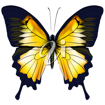 Butterfly. Yellow butterfly isolated vector illustration on white background. Nonexistent butterfly zoology specimen